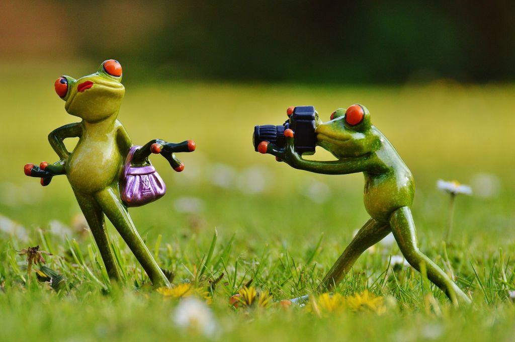 photo_frog